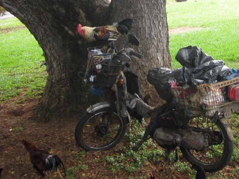Old guy pulls up on a moped and the chickens go NUTS.  he feeds them.  As soon as he walks away, they jump up and start pulling bread out of the basket and dropping it down.